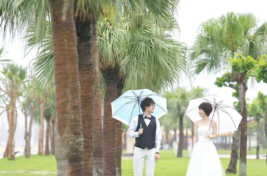 ヤシの木_雨_見つめ合い