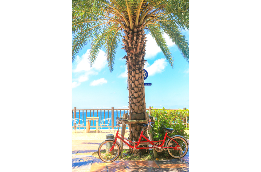 ヤシの木_自転車